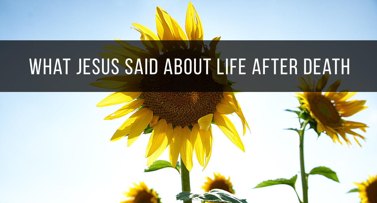 What Jesus Said About Life After Death thumbnail image